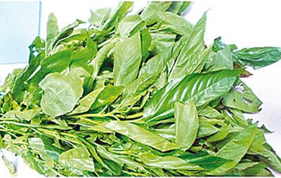 Image result for ewedu