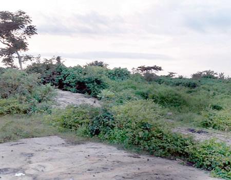 Akure: 10,000-seater stadium turned cattle grazing field, criminal haven, dumpsite